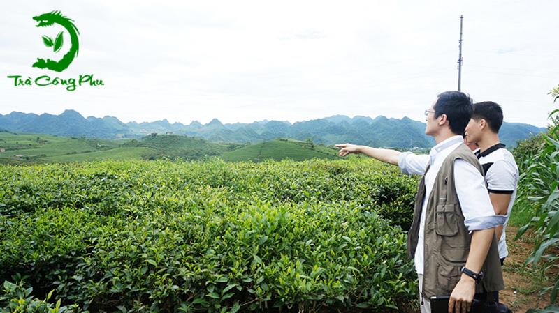 Đồi Trà olong Tại Đài Loan